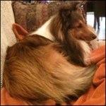 Author Maya Banks dog-smaller 12.15.15